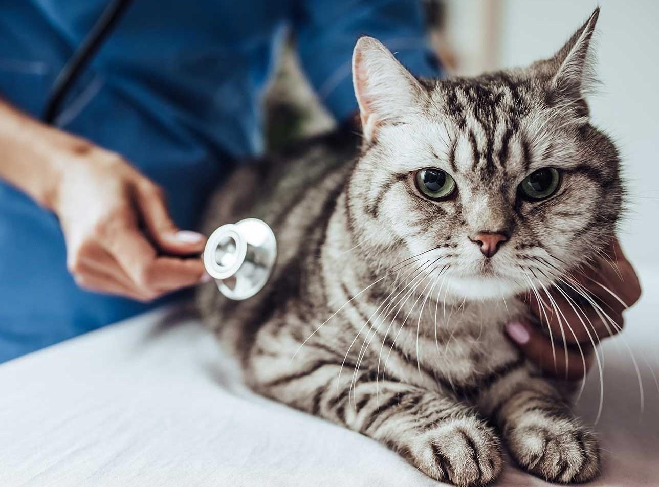 Hubungi Jasa Pembasmi Kutu Kucing Profesional